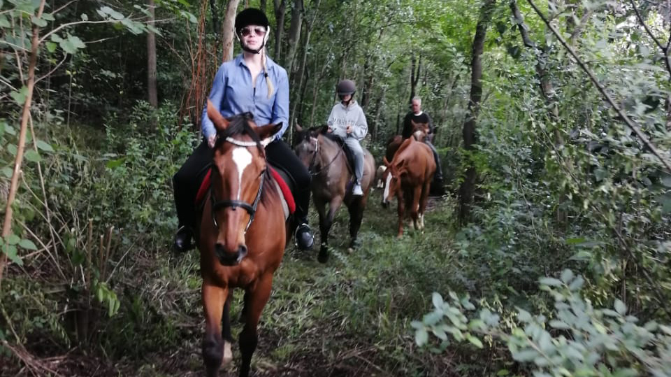 horses-10-1.jpg