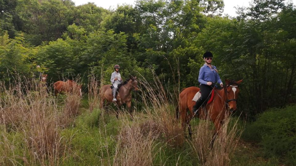 horses-7-1.jpg