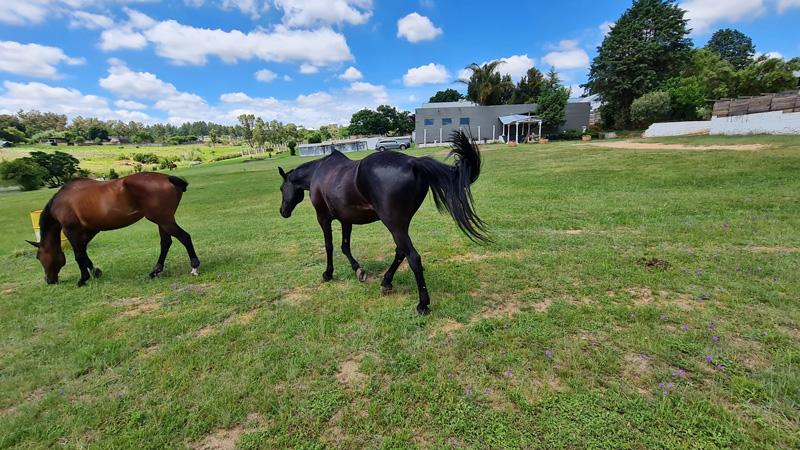 horses-in-the-wild